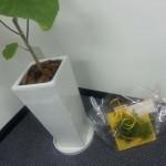 オフィスに緑が増えました!!お客様・転職・キャリア相談者に癒しを提供しますね。