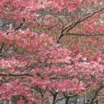 大阪の人財紹介(人材紹介)会社として企業の採用教育に価値を提供